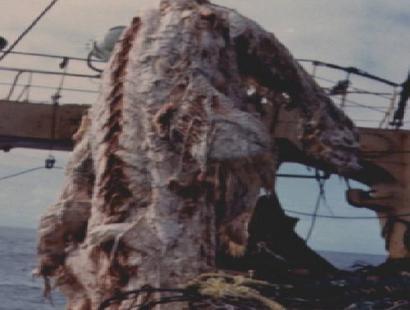 Carcassa dello Zuiyo-Maru