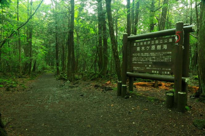 foresta aokigahara