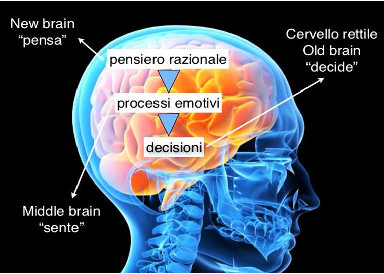 cervello trino